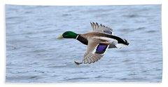 Mallard Duck In Flight Hand Towel
