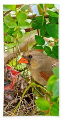 Mama Bird Hand Towel by Frozen in Time Fine Art Photography