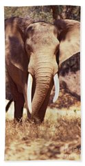 Bath Towel featuring the photograph Mana Pools Elephant by Jeremy Hayden