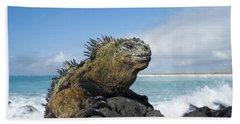 Marine Iguana Turtle Bay Santa Cruz Bath Towel