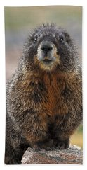 Bath Towel featuring the photograph Marmot by Mae Wertz