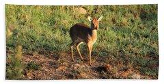 Masai Mara Dikdik Deer Bath Towel
