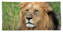 Masai Mara Lion Portrait    Bath Towel