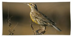 Meadowlark On Weed Hand Towel by Robert Frederick