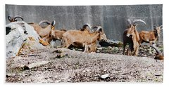 Meeting Of Barbary Sheep Bath Towel
