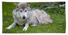 Mexican Gray Wolf Hand Towel by Sebastian Musial