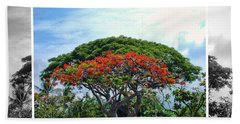 Monkey Pod Trees - Kona Hawaii Bath Towel