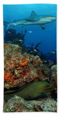 Moray Reef Hand Towel by Carey Chen