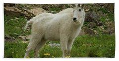 Mountain Goat At Logan Pass Bath Towel