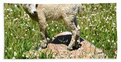 Mountain Goat Kid Among Wildflowers Bath Towel