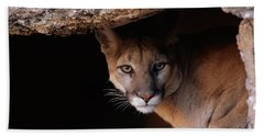Mountain Lion Peering From Cave Hand Towel