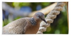 Mourning Dove Bath Towel