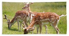 Bath Towel featuring the photograph Multitasking Deer In Richmond Park by Rona Black