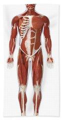 Muscular System, Illustration Hand Towel