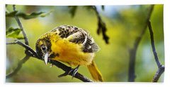 Musing Baltimore Oriole Hand Towel by Christina Rollo