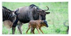 Newborn Wildebeest Calf Hand Towel
