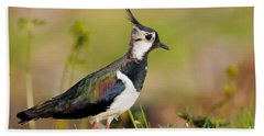 Northern Lapwing Hand Towel