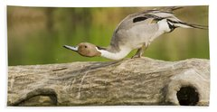 Northern Pintail  Hand Towel