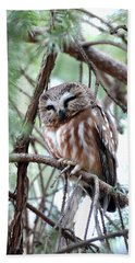 Northern Saw-whet Owl 2 Hand Towel