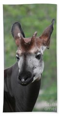 Hand Towel featuring the photograph Okapi #2 by Judy Whitton