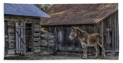Old Red Mule Bath Towel by Lynn Palmer