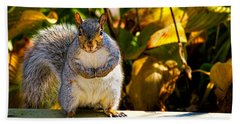 One Gray Squirrel Hand Towel