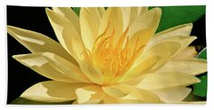 One Water Lily  Hand Towel by Ed  Riche