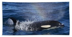 Orca Surfacing Hokkaido Japan Bath Towel