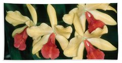 Orchid 11 Hand Towel
