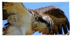 Hand Towel featuring the photograph Osprey Youth by Dianne Cowen