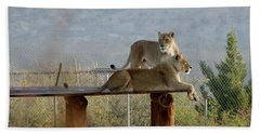 Out Of Africa Lions Hand Towel