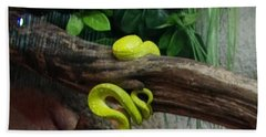 Out Of Africa Tree Snake Hand Towel