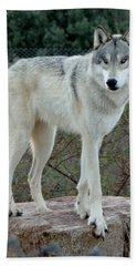 Out Of Africa Wolf  Bath Towel
