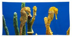 Pacific Seahorses Hippocampus Ingens Are Among The Giants Of Their World Bath Towel