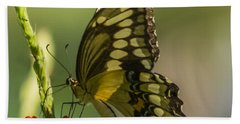 Bath Towel featuring the photograph Palamedes Swallowtail by Jane Luxton