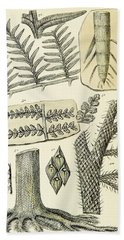 Paleozoic Flora, Calamites, Illustration Bath Towel