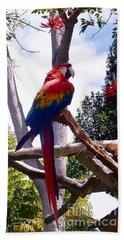Parrot Hand Towel by Susan Garren