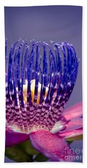 Passiflora Alata - Ruby Star - Ouvaca - Fragrant Granadilla -  Winged-stem Passion Flower Bath Towel
