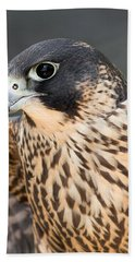Bath Towel featuring the photograph Peregrine Falcon by Dale Kincaid