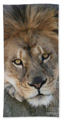 Pet Me Hand Towel by Judy Whitton