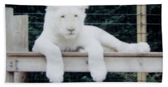 Hand Towel featuring the photograph Philadelphia Zoo White Lion by Donna Brown