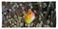 Pink Anemonefish Amphiprion Perideraion Hand Towel