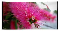 Bath Towel featuring the photograph Pink Bottlebrush Flower - Within Border by Leanne Seymour