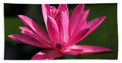 Pink Water Lily Hand Towel by Meg Rousher