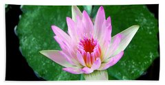 Hand Towel featuring the photograph Pink Waterlily Flower by David Lawson