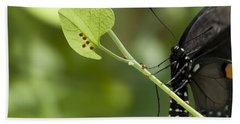 Hand Towel featuring the photograph Pipevine Swallowtail Mother With Eggs by Meg Rousher
