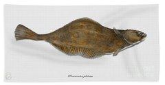 Plaice Pleuronectes Platessa - Flat Fish Pleuronectiformes - Carrelet Plie - Solla - Punakampela Hand Towel