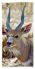 Portrait Of A Bushbuck In Kruger National Park-south Africa  Bath Towel