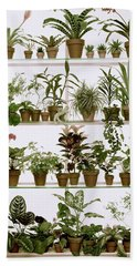 Potted Plants On Shelves Hand Towel