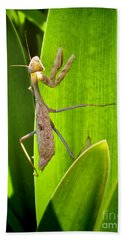 Bath Towel featuring the photograph Praying Mantis by Kasia Bitner